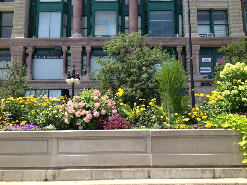 Flowers in the median