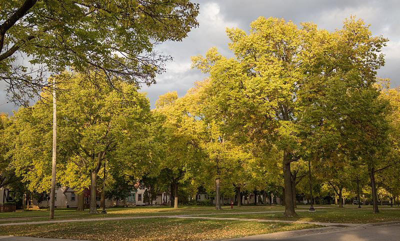 Victory_Memorial_Parkway_North_Minneapolis_Autumn_6D2B1666
